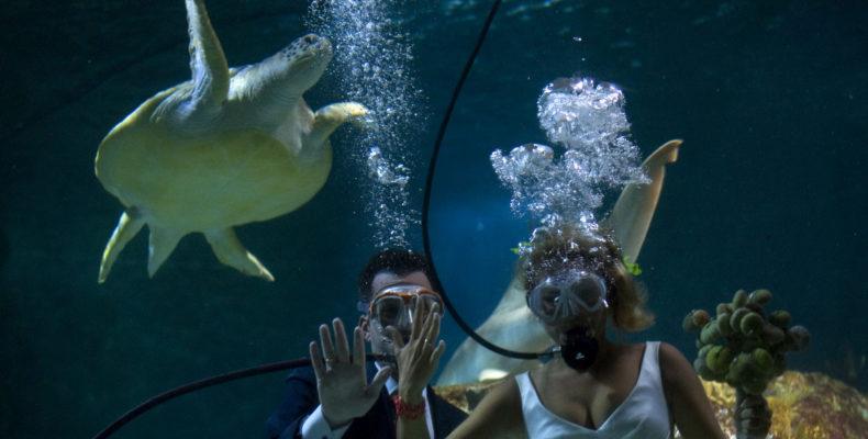 SPAIN-WEDDING-UNDERWATER