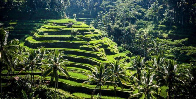 Романтика на Гили (Бали) 8