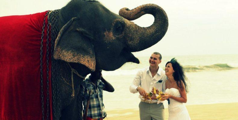 Свадьба на слонах 1