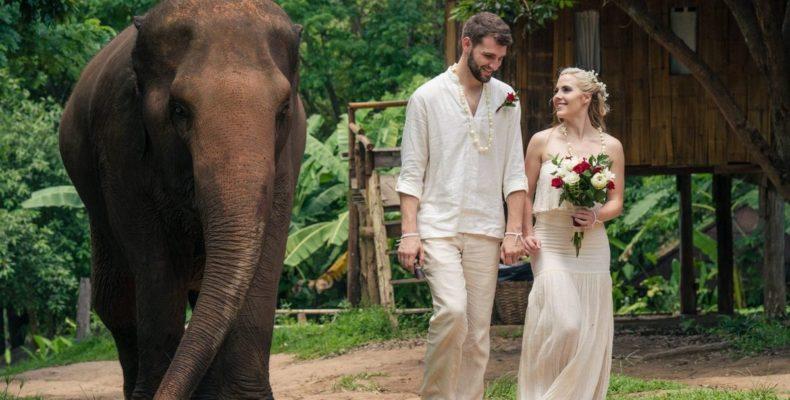 Свадьба на слонах 3