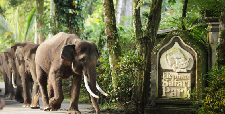 Свадьба на слонах 4