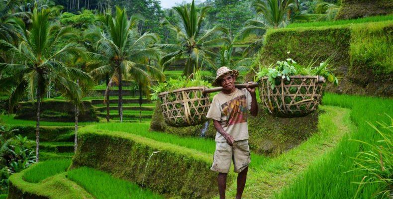 Тур по Бали 7