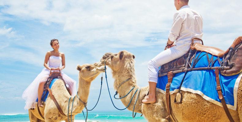 свадьба на верблюдах бали 1