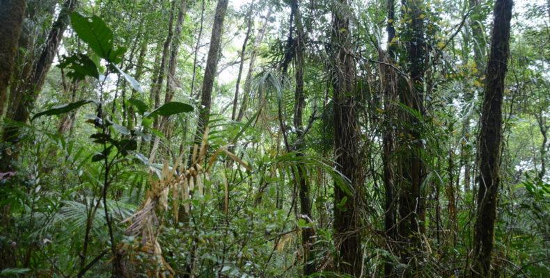Заповедными тропами Борнео 6