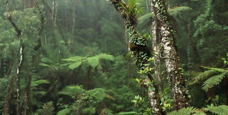 Заповедными тропами Борнео 7
