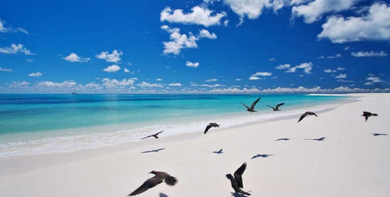 Bird Island Seychelles 1