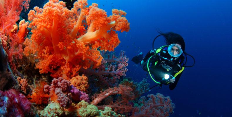 дайвинг на Фиджи 1