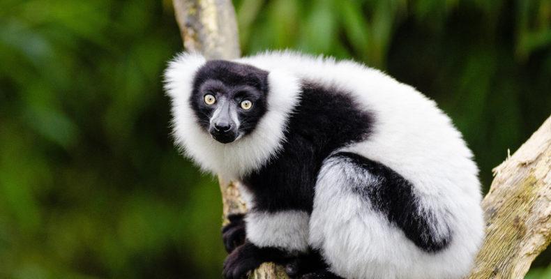 Мадагаскар 11