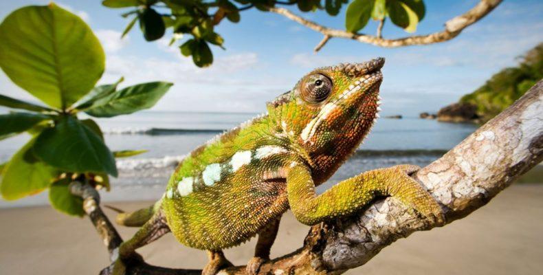 Мадагаскар 8