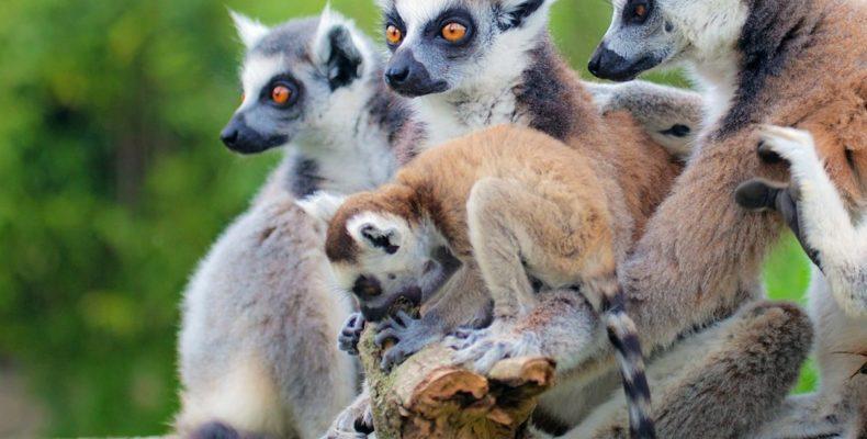 Мадагаскар 9