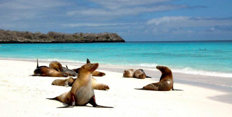 галапагосские острова 3