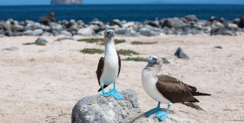 галапагосские острова 5