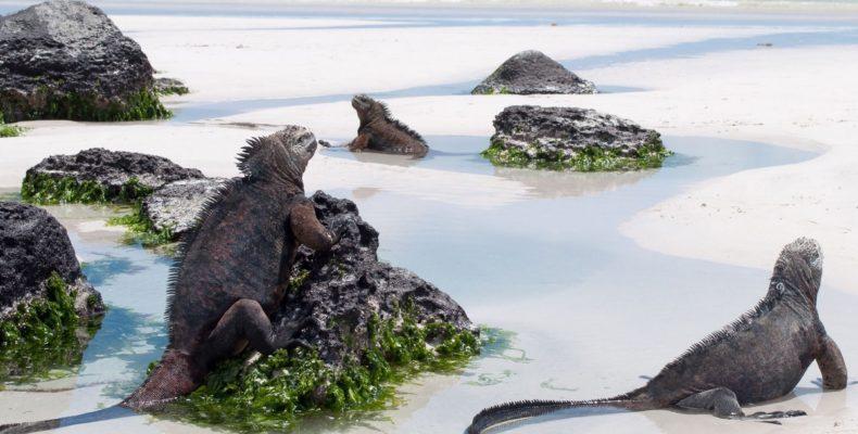 галапагосские острова 6