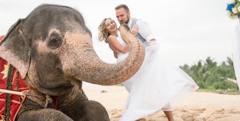 свадьба на шри ланке 2