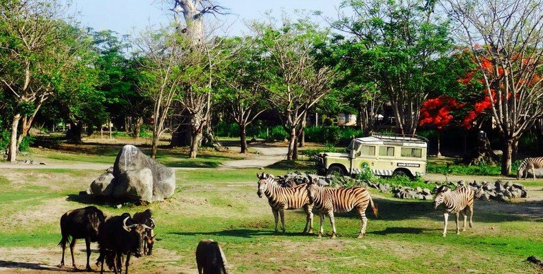 Mara River Safari Lodge 3