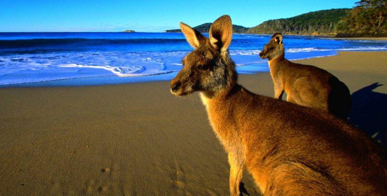 Тур в Австралию 6